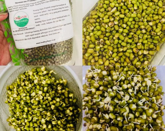 How to Make Mung Beans Sprouts